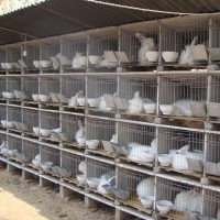 质保笼具 现货销售  多种  兔笼 地板砖兔笼 水泥兔笼 **养殖用兔笼 镀锌兔笼